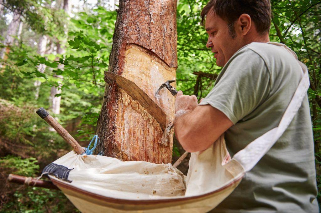 Ein Pecher lässt nichts verkommen, nutzt alles was der Wald ihm gibt
